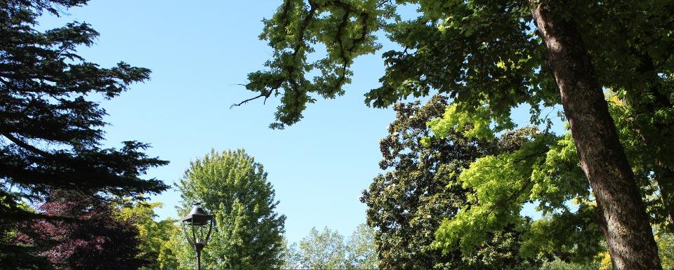Spécialiste en traitement/santé des arbres, désherbage, traitements phytosanitaire, expertises et formation lutte